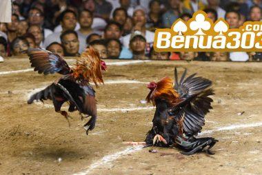 Bonus Permainan Sabung Ayam S128 Online