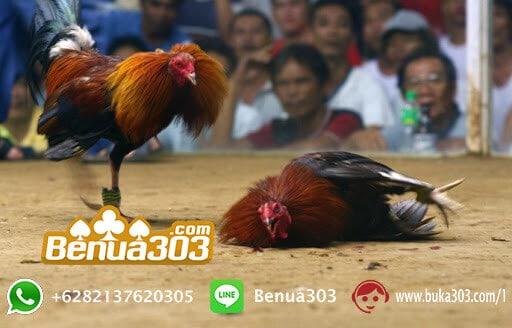 Cara Mendapatkan Bonus 100% Sabung Ayam (2)