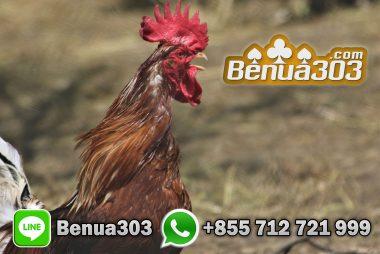Daftar Adu Ayam Situs S128 Online
