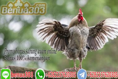 Bonus 100% Kemenangan Sabung Ayam Online