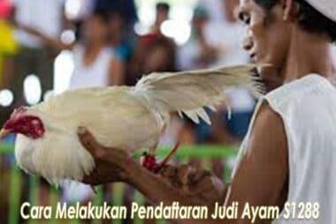 Cara Melakukan Pendaftaran Judi Ayam S1288